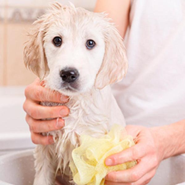 Wie oft sollte ich meinen Welpen baden?
