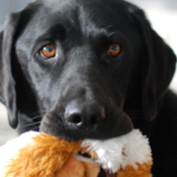 Wie adoptiere ich einen Hund?