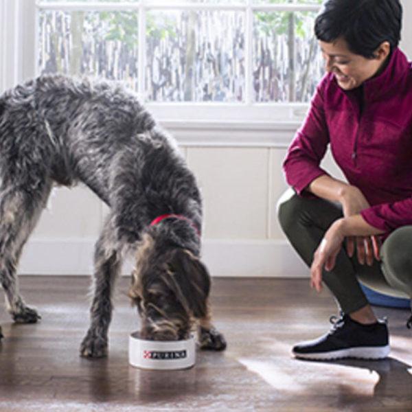 Vorteile von Senior Hundefutter
