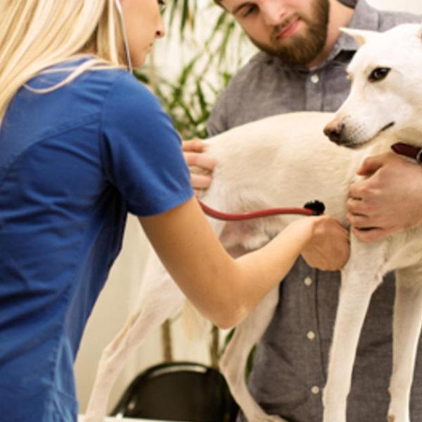 Hundedurchfall - Ursachen und Behandlungen