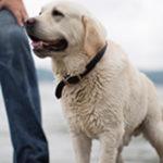 Was ist menschliches Hundefutter?