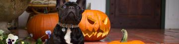 purina_halloween Sicherheitstipps für pets_1200x300.jpg