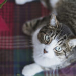 5 für Hunde und Katzen giftige Urlaubspflanzen