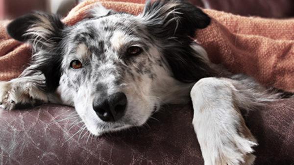 7 Möglichkeiten, ältere Hunde aktiv und gesund zu halten