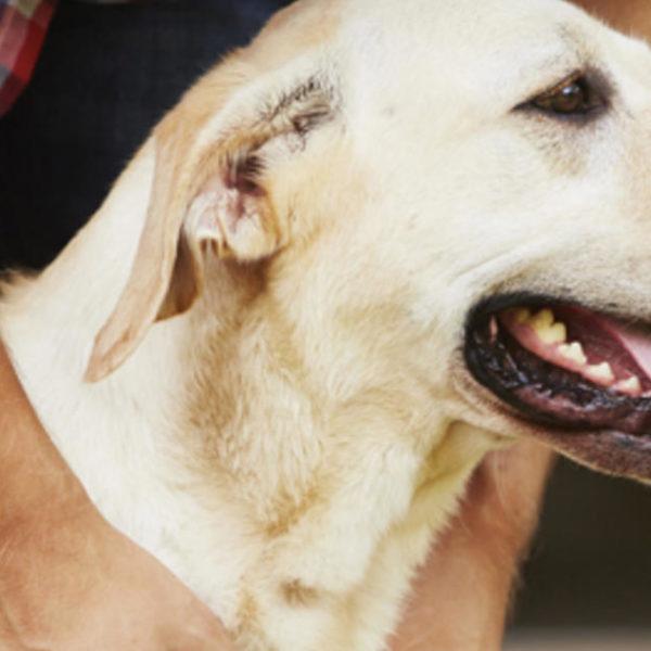 Ballaststoffquellen für Hunde