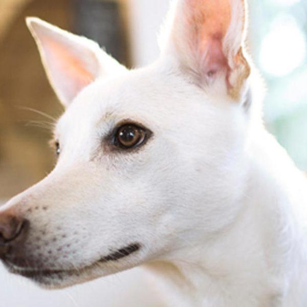 Grundlegendes zu Hundeanfällen - Ursachen und Behandlung