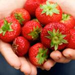 Können Hunde Erdbeeren essen?