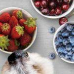 Können Hunde Obst und Beeren essen?