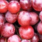 Können Hunde Trauben essen?