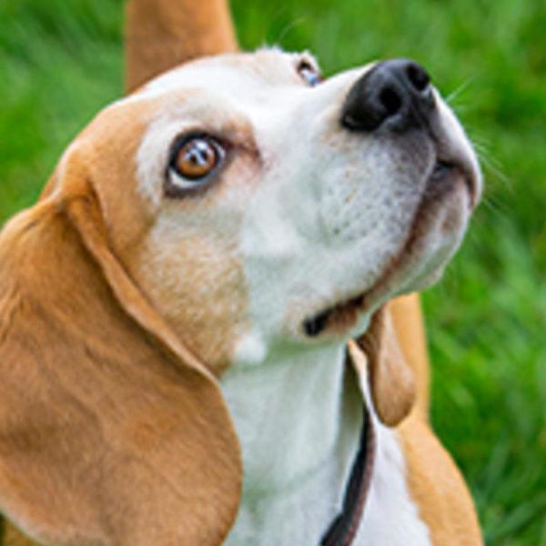 Sollten Sie Ihrem Hund empfindliche Haut mit Hundefutter füttern?