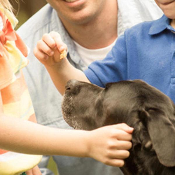 Welche menschliche Nahrung ist schlecht für Hunde?
