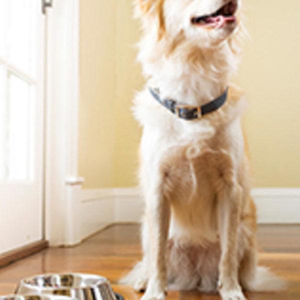 Wie wähle ich ein gesundes Hundefutter? - Purina®