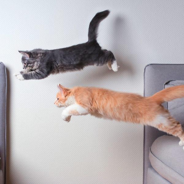 Übung für Katzen: 9 lustige Möglichkeiten zum Spielen