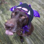 Dog in monster costume