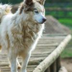 Bekommt mein Hund genug Ballaststoffe?