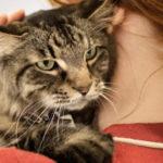 Was verursacht Blasensteine bei Katzen?