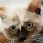 Cat Urinary Tract Disease - Ursachen und Behandlung