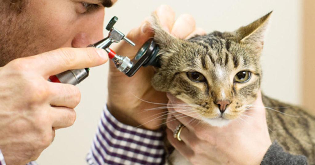 Bluthochdruck Katze