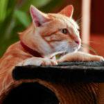 Hat meine Katze Verdauungsprobleme? - Purina®
