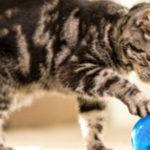 Sollte ich ein Katzenspielzeug verwenden?