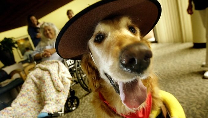 älterer Hund als Cowboy im Seniorenheim verkleidet