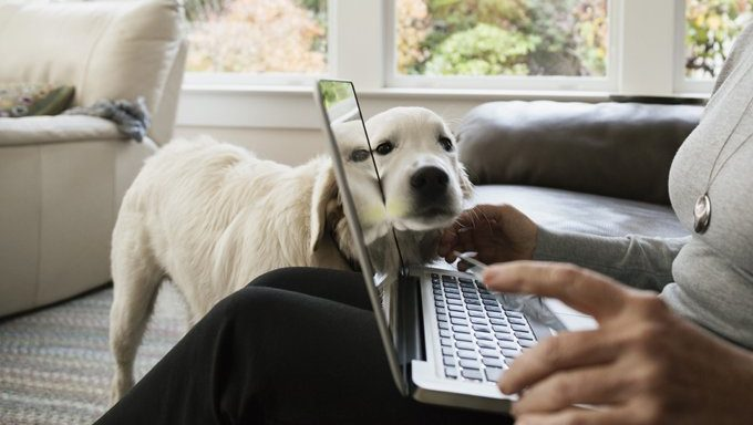 älterer Hund ruht Kopf an Hand des Menschen mit Laptop-Computer