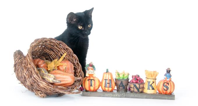 Schwarze Katze, die nahe bei Füllhorn- und Erntedankzeichen sitzt.