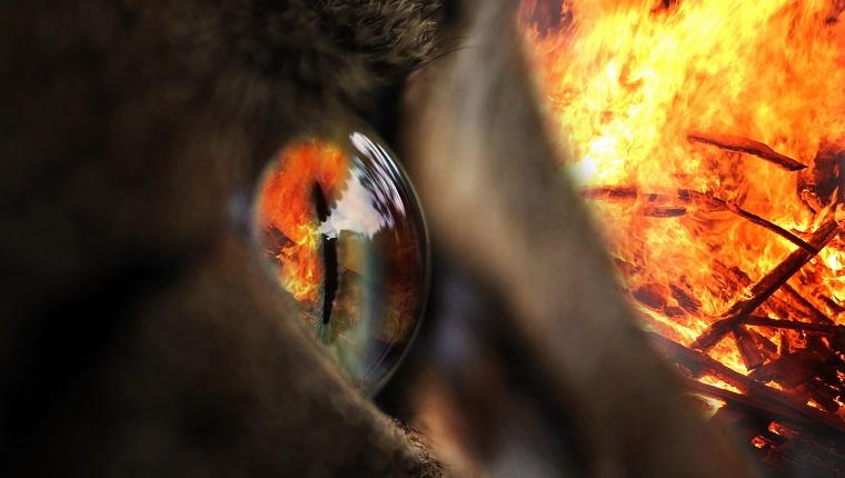 Das Feuer im Auge. In einem Auge einer Katze spiegelt sich ein Feuer