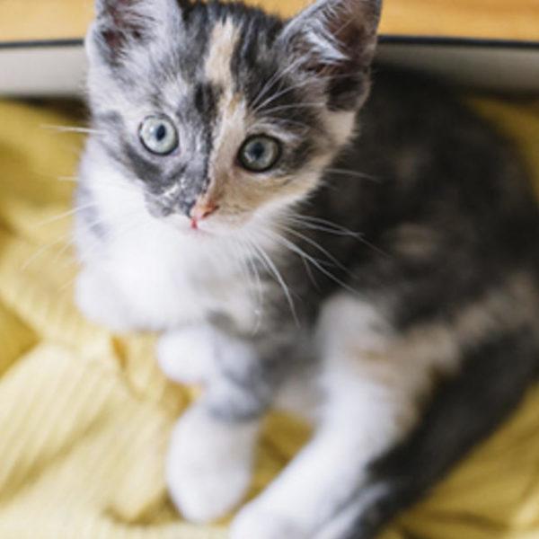 7 Tipps zum Füttern eines Kätzchens, das Sie kennen sollten