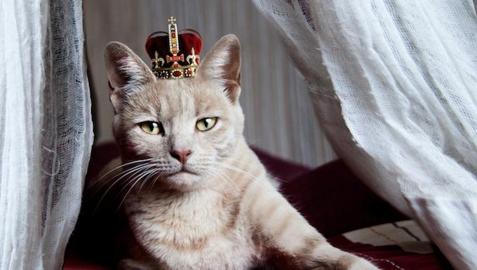 Königskatze beginnen an Ihren eigenen Landtag