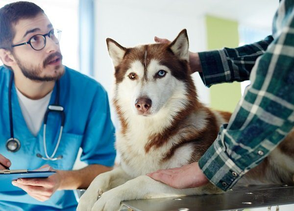 Vet in uniform making prescriptions for husky dog and talking to its owner