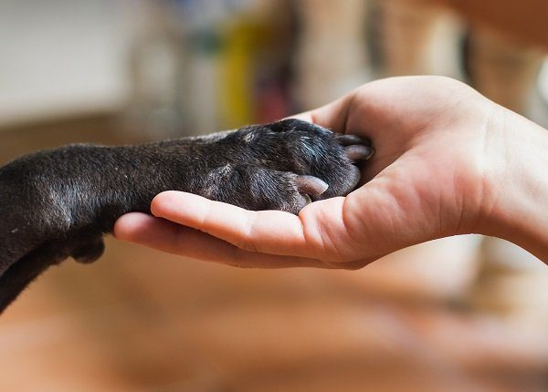 Woman hand holding paw of black dog. Animal and human friendship concept.