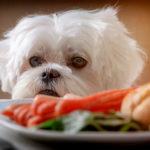 Hat mein Hund Hunger oder bittet er um eine Belohnung? Sie setzen sich zum Essen. Plötzlich bittet Ihr Hund um einen Bissen. Seine Wimmern mögen überzeugend sein, aber woher wissen Sie, ob Ihr Hund hungrig ist oder nur um eine Belohnung bettelt?