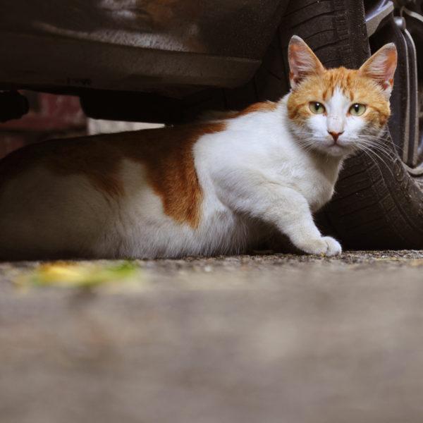 Hilfe für streunende und wilde Katzen: Was Sie wissen sollten