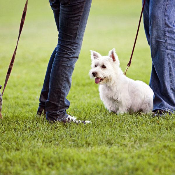Hundepark Verhalten und Etikette
