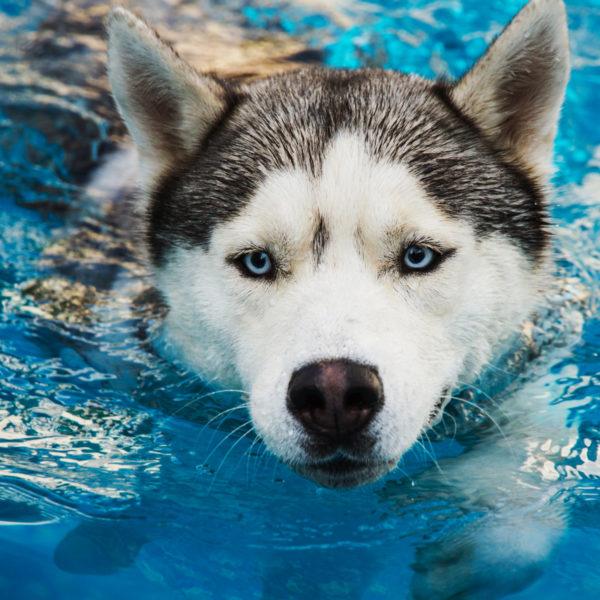 Hundewassersicherheit: Tipps, um Ihr Haustier gesund zu halten