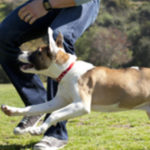 Ist mein Hund zu dick zu dünn oder gerade richtig? #DogFoodAdvice