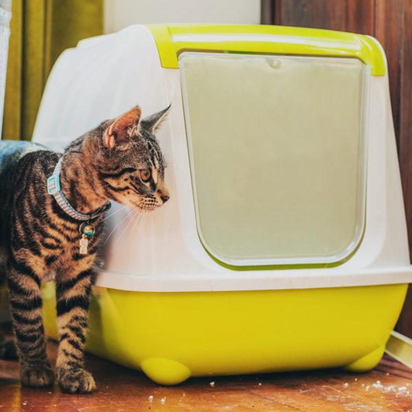 Kontrolle des Katzenstreukastengeruchs