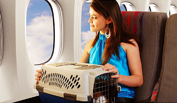 Mit dem Hund auf dem Luftweg