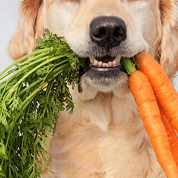 Natural Vs Holistic Dog Foods