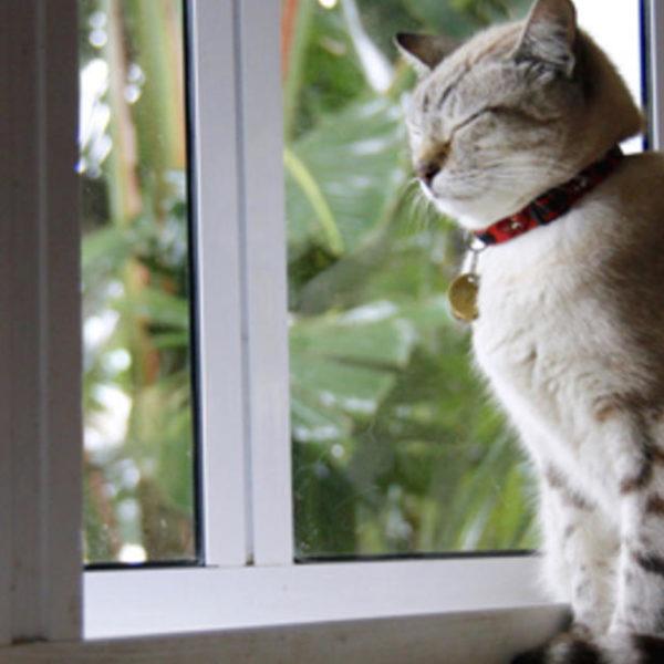 Reisen mit Katzen: Großartige katzenfreundliche Ziele für den Sommer