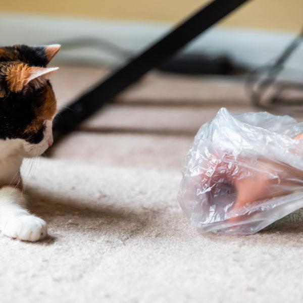 Säubern der üblichen Katzenunordnung