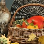 cat next to basket full of thanksgiving gourds