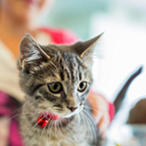 Welche Nährstoffe benötigen Kätzchen in ihrem Katzenfutter?