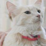 Wie können Katzen Stress abbauen und die Stimmung verbessern?