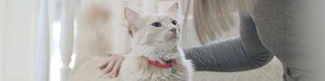 Katzen helfen bei Stimmungen