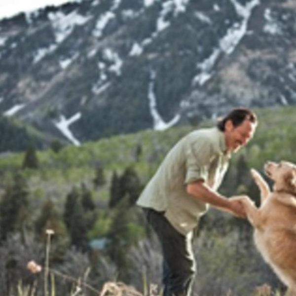 Wie soll ich meinen Hund füttern? #DogFoodAdvice