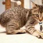 Wie soll ich mit den ersten Wochen meines Kätzchens zu Hause umgehen?