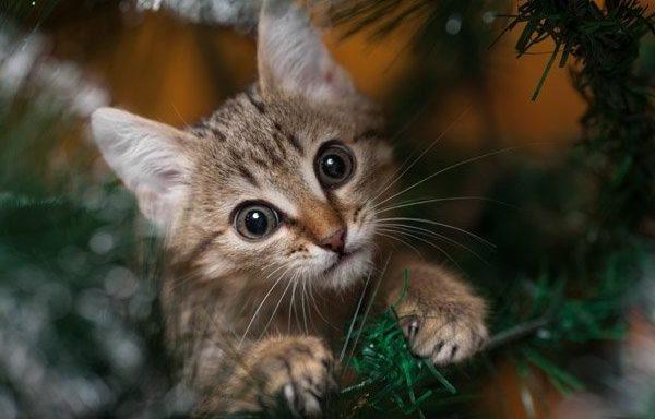 cat standing by broken ornaments