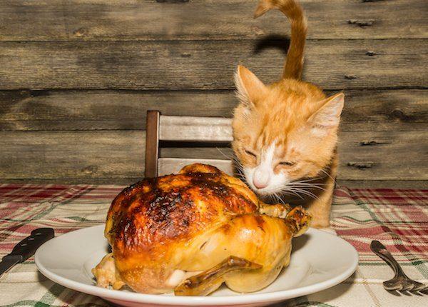 Cat eating roast turkey